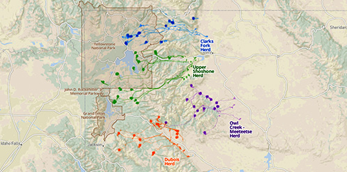Eastern Greater Yellowstone Mule Deer Project