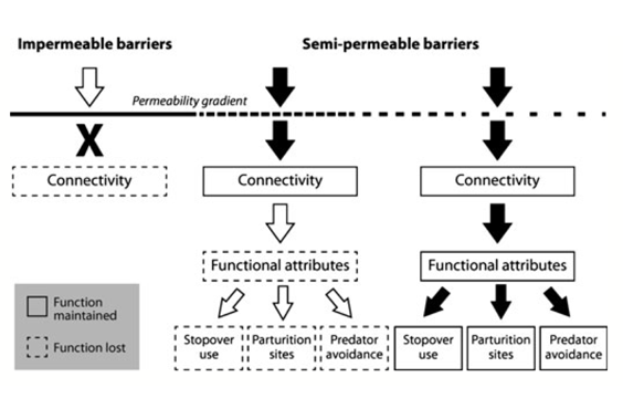 Semi-permeable barriers and migration
