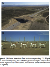 Pronghorn and Mule Deer Use of Underpasses and Overpasses publication screenshot
